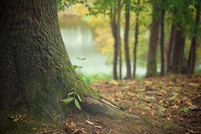 Büromöbel: Wie Nachhaltigkeit bei der Auswahl helfen kann Ratgeber Bild mittig-oben