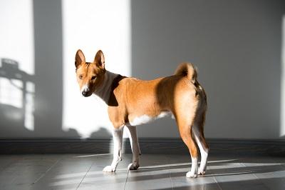 Africanis, Boerboel & Co.: Die Geschichte der Hunde Afrikas Erfahrung Bild mittig fotolia.com; © Jana D.